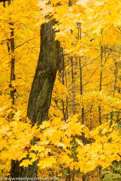 Bruce Trail in Autumn
