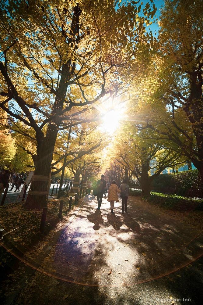 Autumn in Tokyo 2018