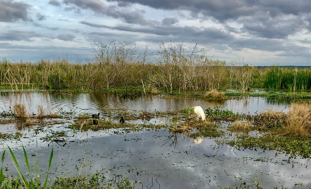 Marsh.  Image by Dick Caldwell