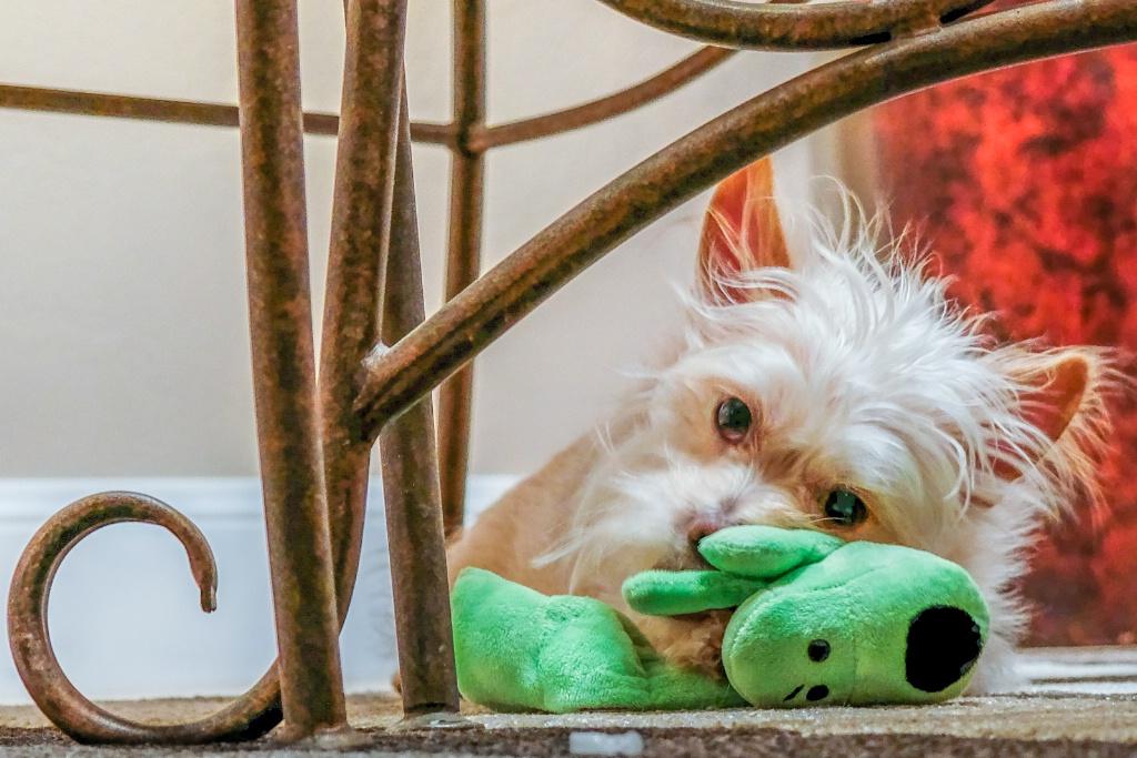 loving new toy animal