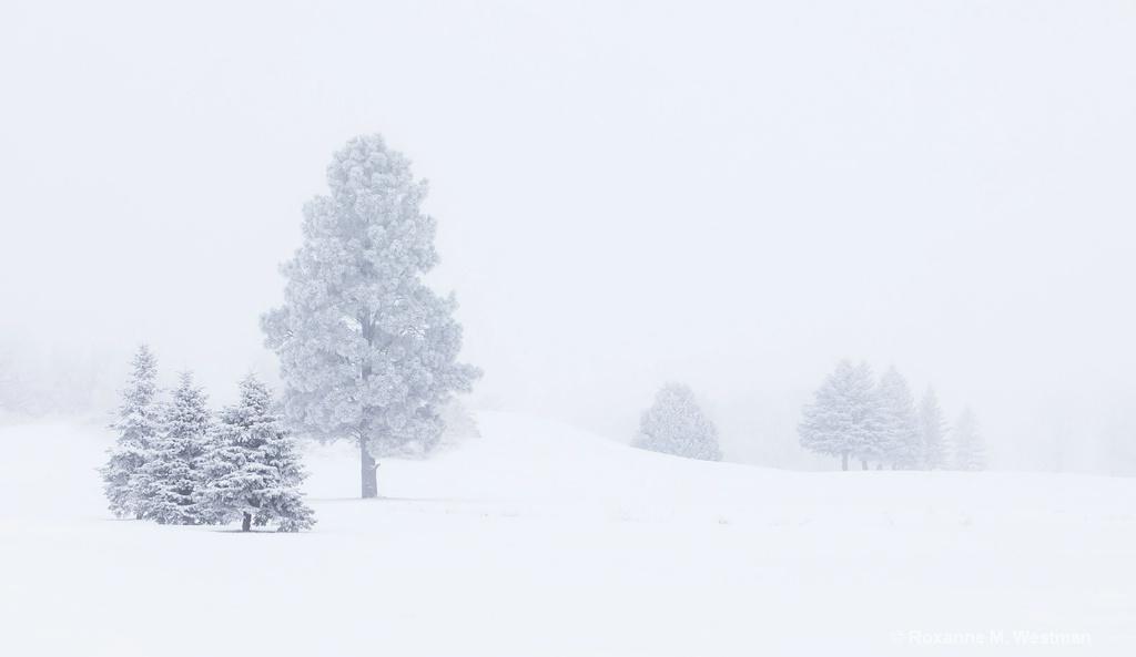 Snow fog in North Dakota