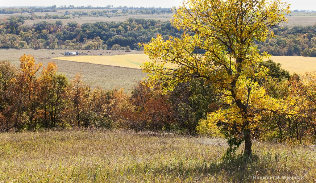 Sheyenne River valley overlook