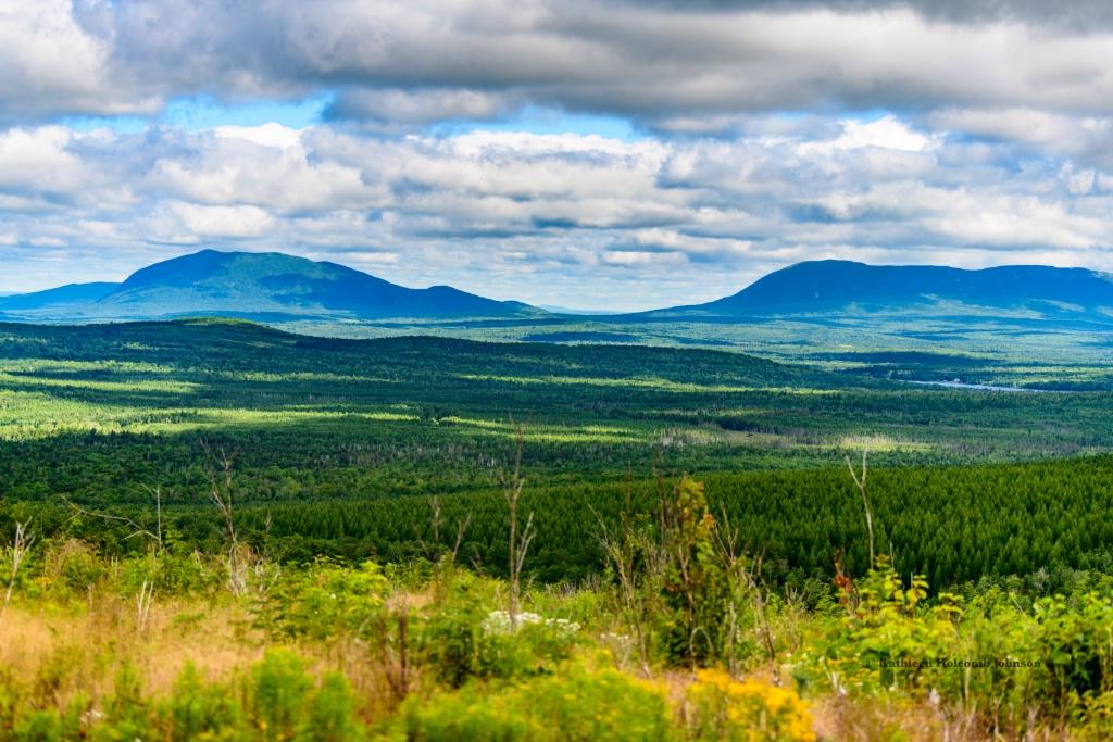 Northern Maine Massive Forests!