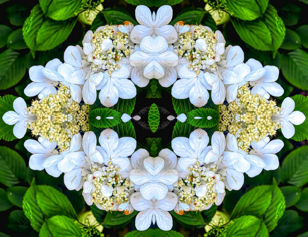 A Floral Abstract