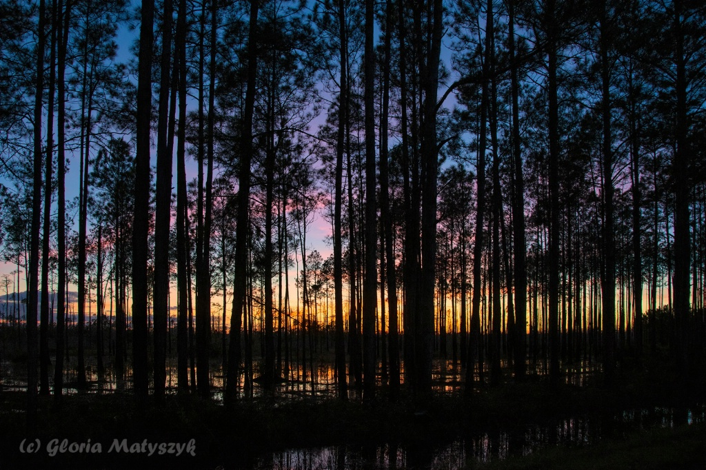 Just after sunset. Okefenokee NWR. Georgia, USA