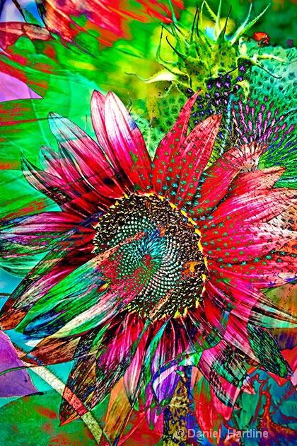 sunflower-comp-17