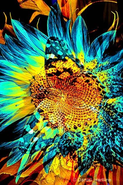 sunflower-comp-26