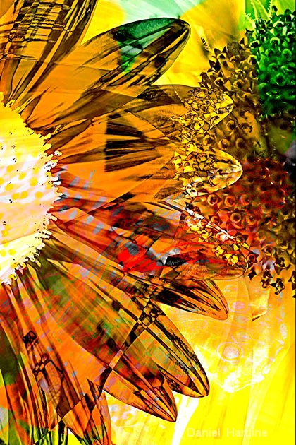 sunflower-comp-28