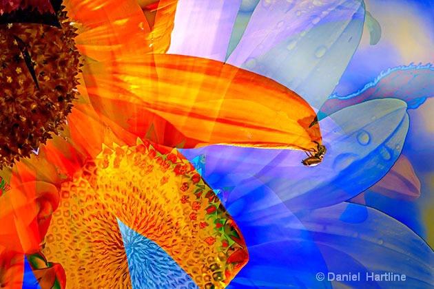 sunflower-comp-33