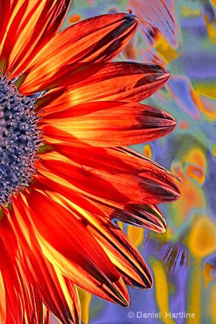 sunflower-comp-36