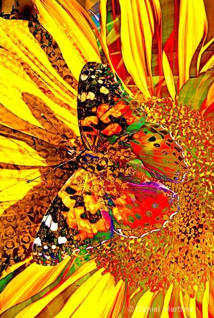 sunflower-comp-37