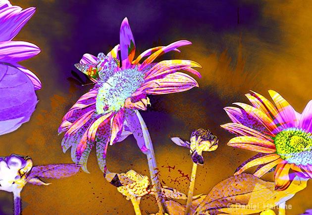 sunflower-comp-39