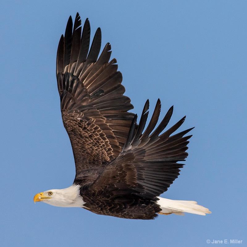 Flying So High!