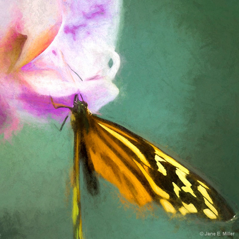 Impressionistic Butterfly