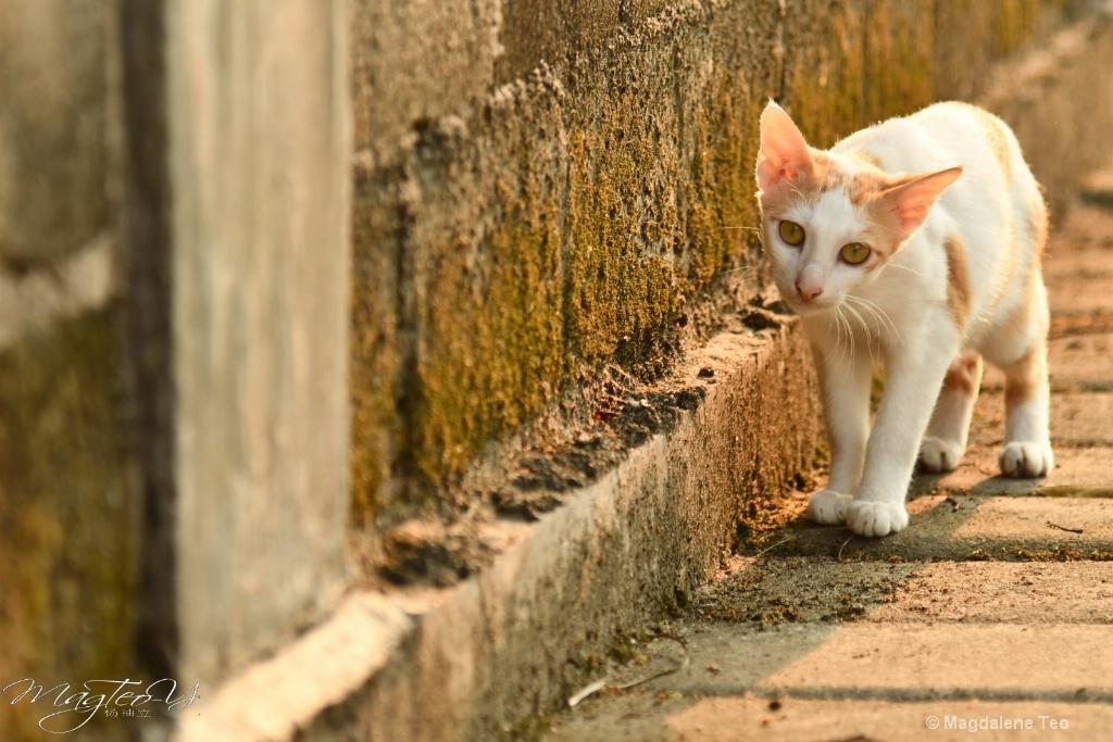 Felines of Batam 2