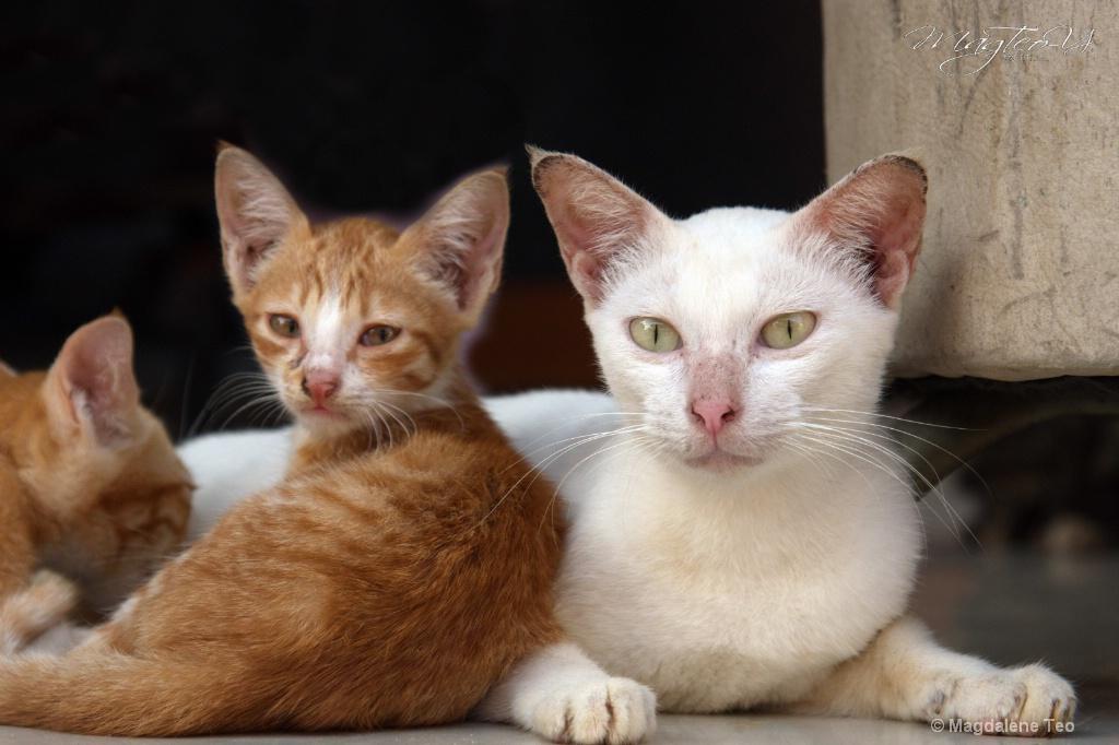 Felines of Batam 1