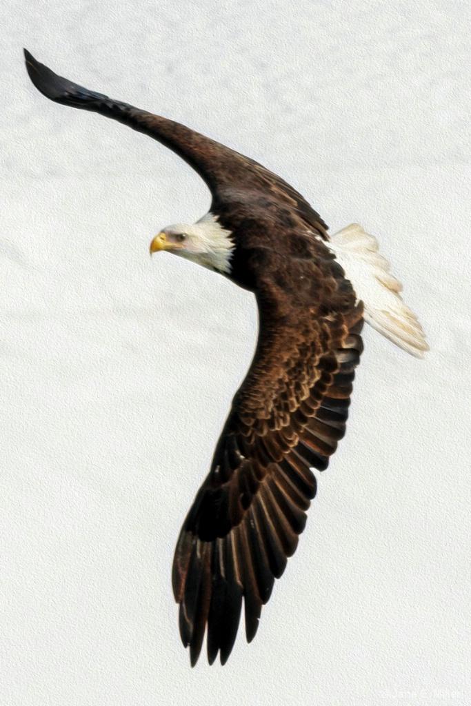 Impressive Wing Span!