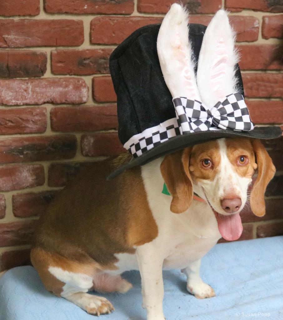 Hank bunny ears hat