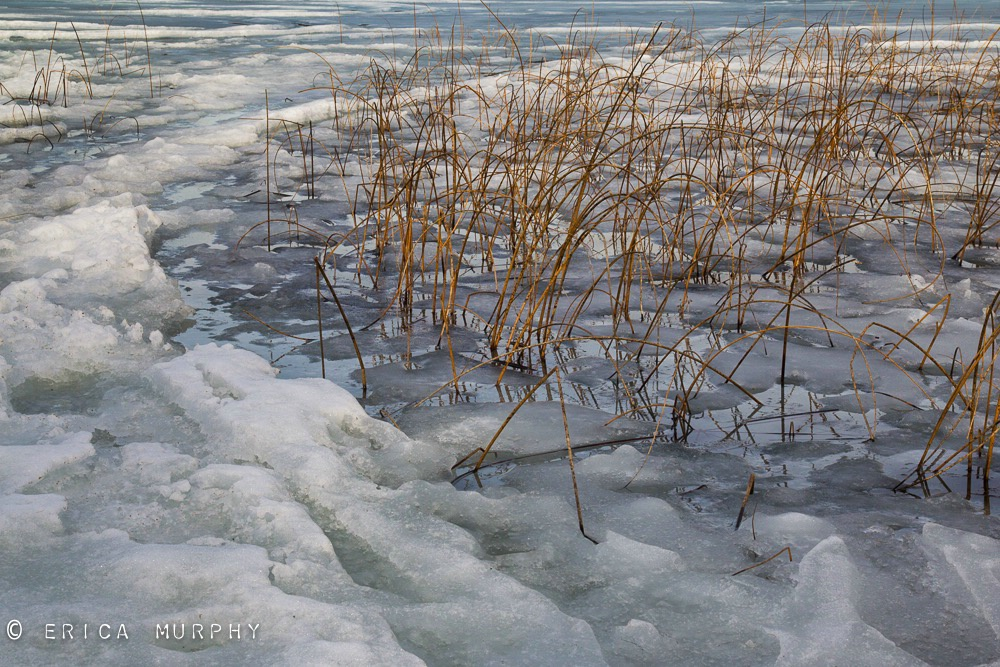 Starting to Thaw