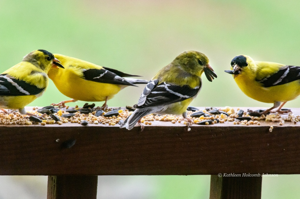Goldfinch Dinner Gathering!