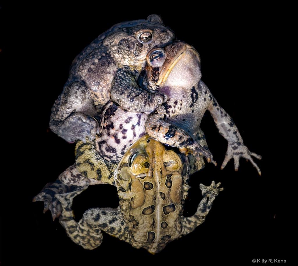 Toads in Love Under Water