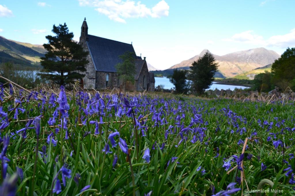 St John's Bluebells