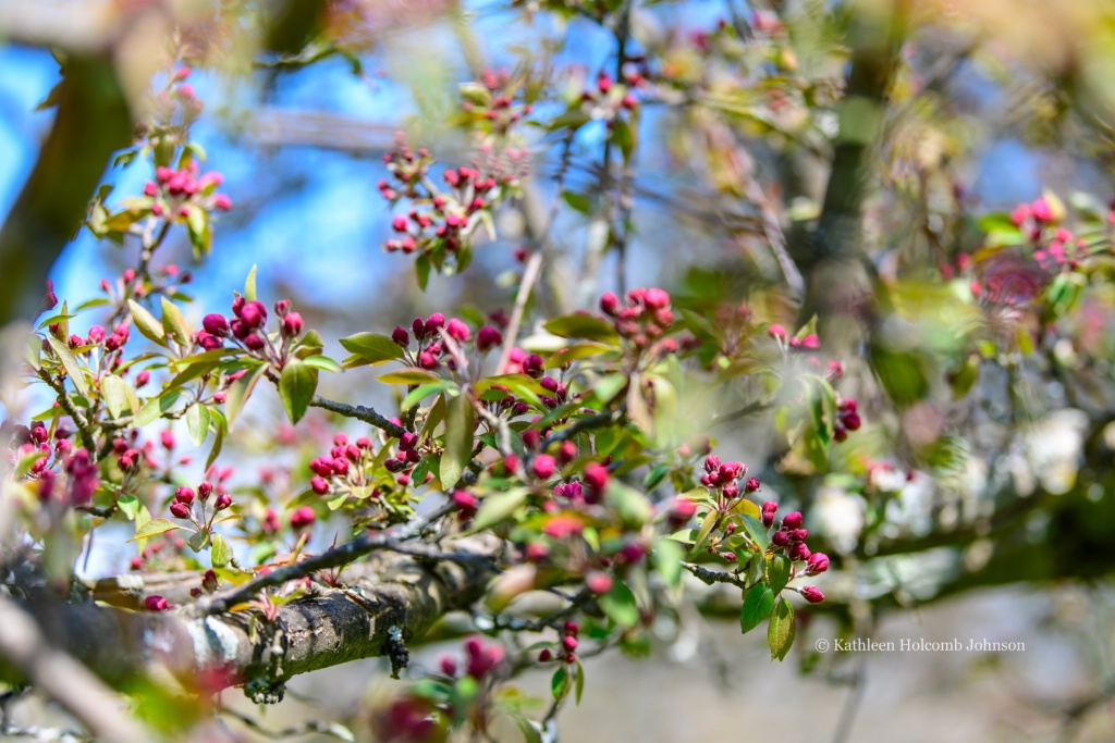 Spring - Springing