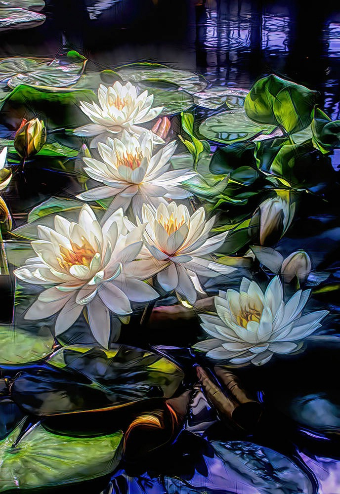 A Gathering Of Water Lilies