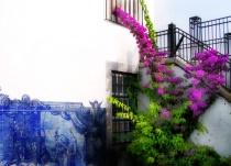 Striking Flowers