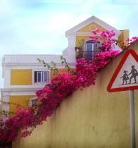 Pedestrian Flowers?