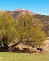 Schelbourn Ranch
