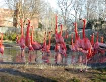Flamingo morning greetings