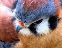 """""""Sparrow Hawk"""""""