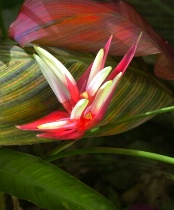 The Exotic Ginger Bloom