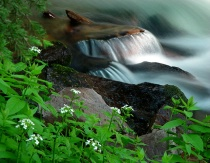 Maroon Creek Cascades