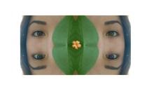Eyelusion