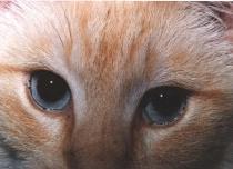 Lances's Eyes