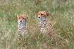 Cheetah Twins