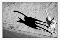 The Dog with a Cat's Shadow