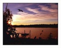 lake sunset(1)