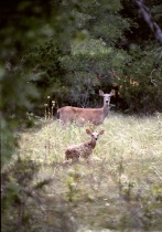 <font color=#000099><b>Deer Me!</b></font>