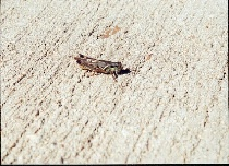 insect sunning