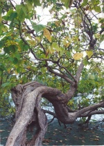 Horizontal Tree
