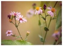 The Antflowers