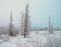 Ice Fog in Pastels