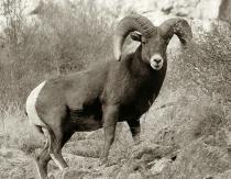 Huge Ram