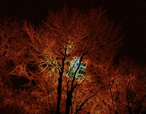 Fall Moonglow