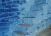 blue steps