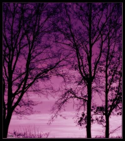 Lake dusk reflections