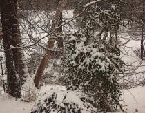 Last Night's Snow